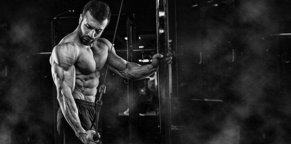 The Next 3 Things To Immediately Do About midget bodybuilding